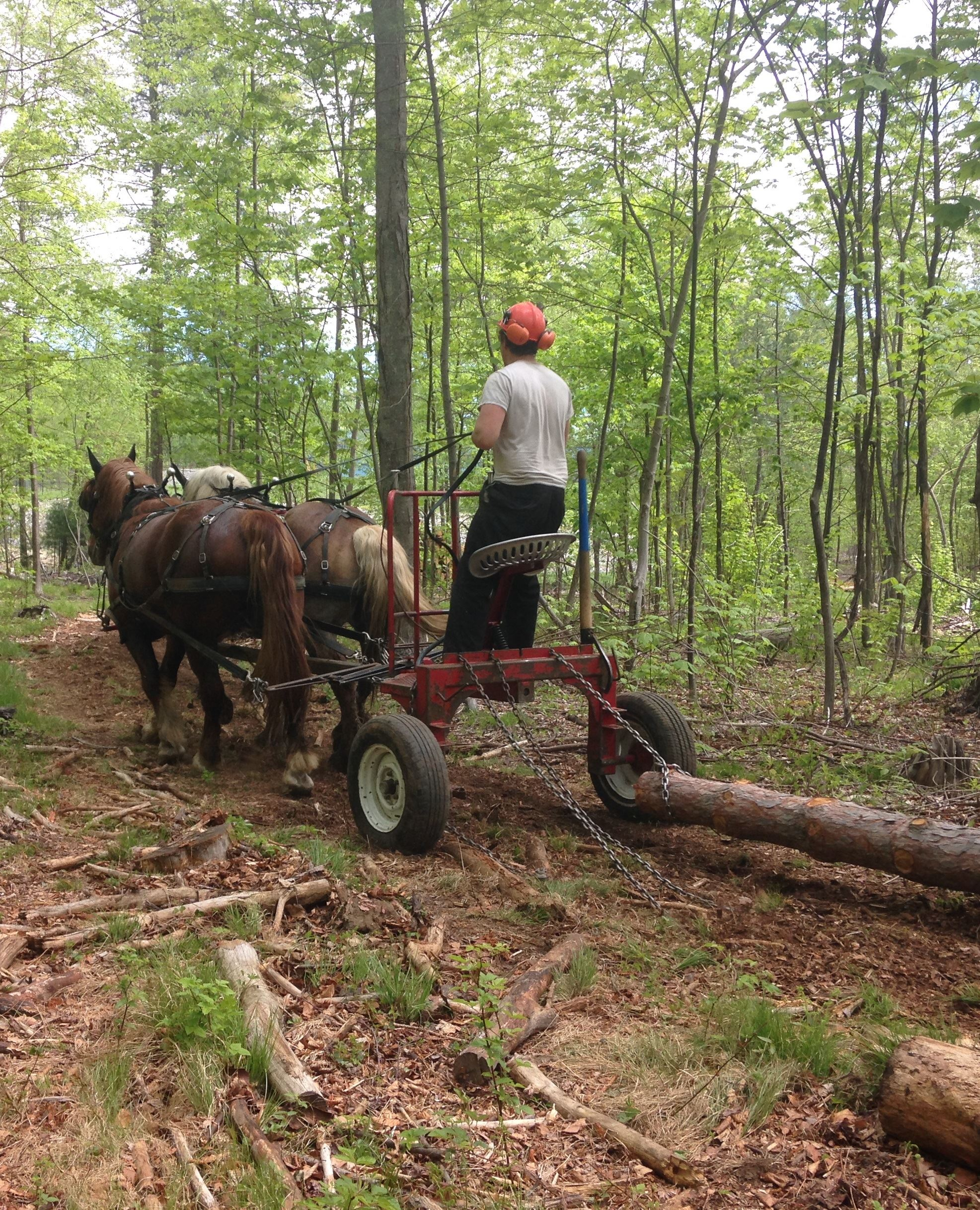 Image of horse logging