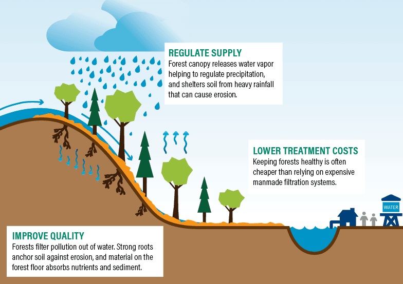 Image of healthy forests and water cycle